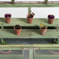 7-7693-Greenhouse_miniature-6