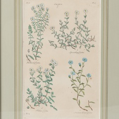 7-8071_john_hill_botanicals-6-of-10
