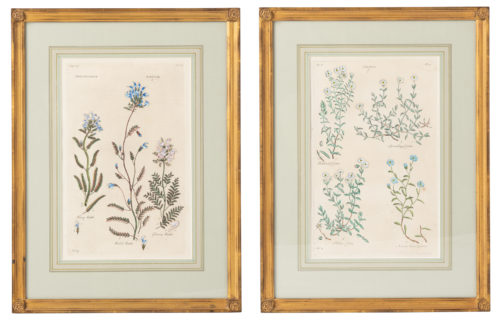 A Pair of John Hill Botanicals, Circa 1770